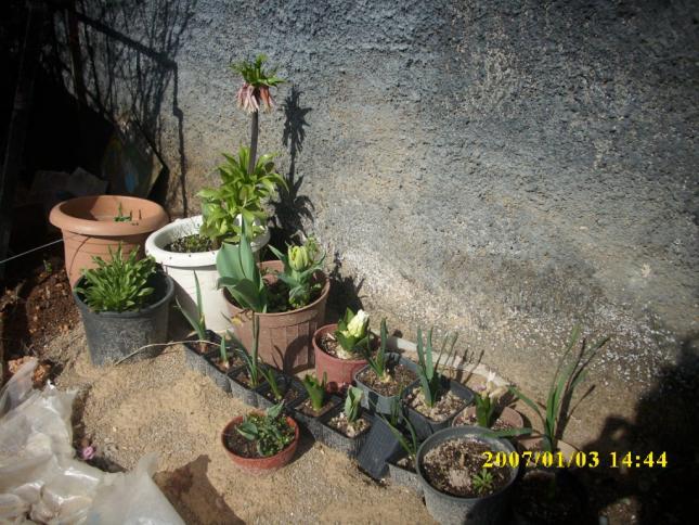 Name:  bahçe eski 1.jpg Views: 1068 Size:  70.0 KB
