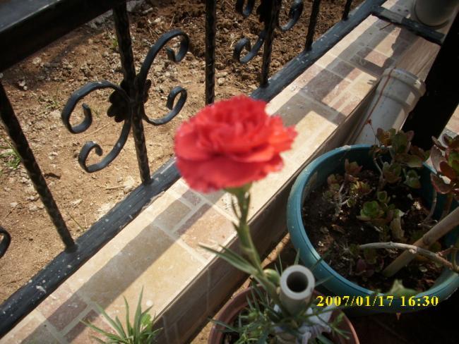 Name:  çiçeklik hazır sonra içi.jpg Views: 1000 Size:  63.8 KB