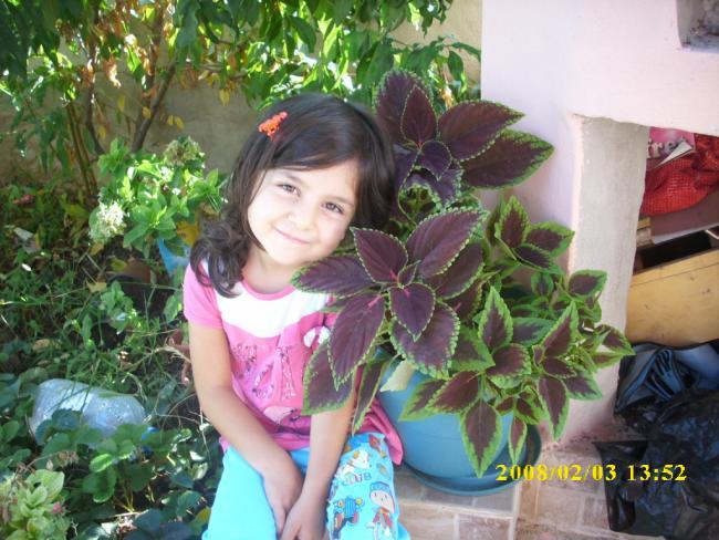 Name:  yaprağı güzel ve yavrum.jpg Views: 975 Size:  63.3 KB