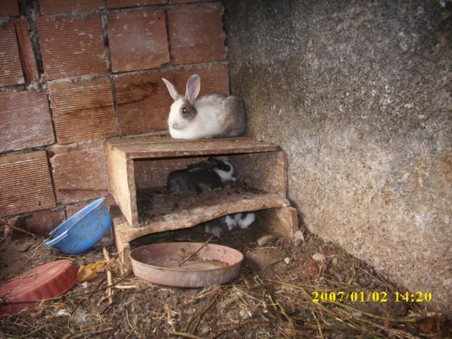 Name:  tavşann.jpg Views: 374 Size:  65.3 KB
