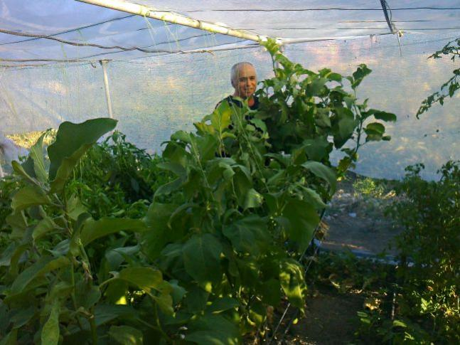 Name:  patlıcan.jpg Views: 1112 Size:  56.6 KB