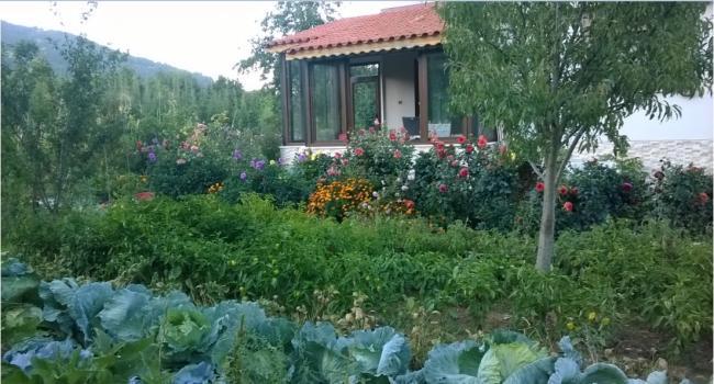 Name:  bahçe 25.09.2016.jpg Views: 585 Size:  53.3 KB