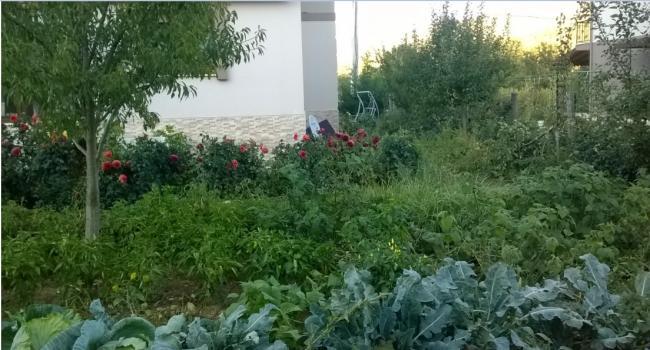 Name:  bahçe 2-25.09.2016.jpg Views: 608 Size:  50.9 KB