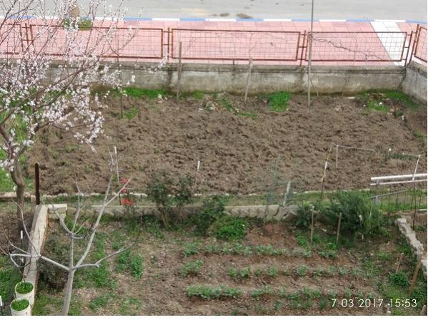 Name:  bahçe3.jpg Views: 1887 Size:  66.1 KB