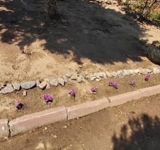 Name:  çiçek 1.jpg Views: 279 Size:  22.7 KB