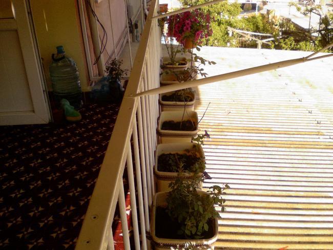 Name:  balkondaki saksılarımdan görüntü 1.jpg Views: 1450 Size:  60.3 KB