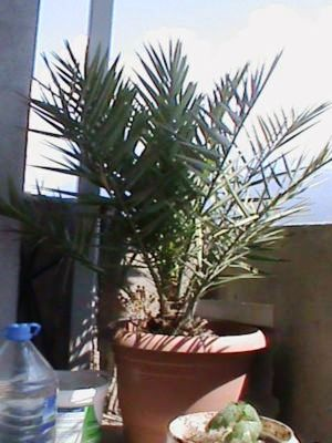 Name:  bitkilerim 021.JPG Views: 3818 Size:  39.7 KB