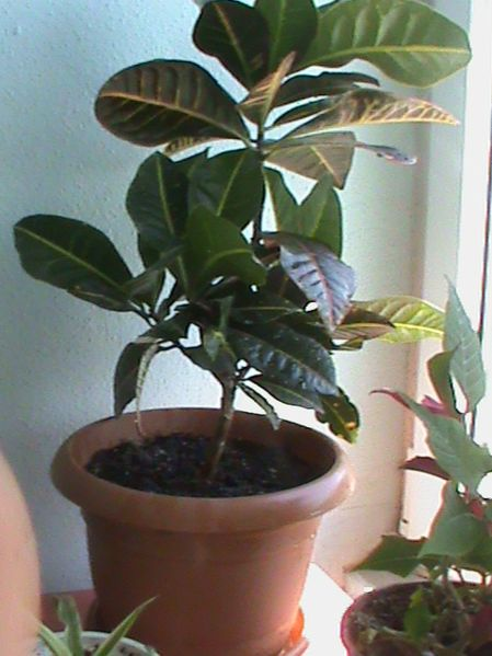 Name:  bitkilerim 022.JPG Views: 3861 Size:  55.3 KB