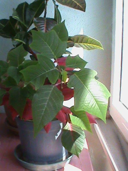 Name:  bitkilerim 023.JPG Views: 3852 Size:  49.6 KB