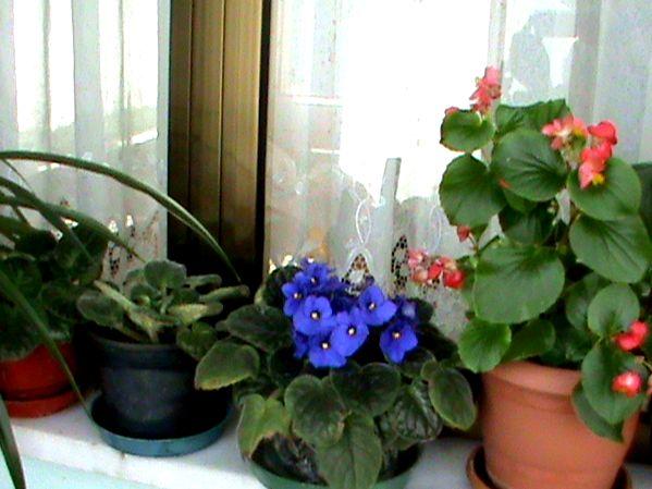 Name:  bitkilerim 027.JPG Views: 3796 Size:  56.4 KB