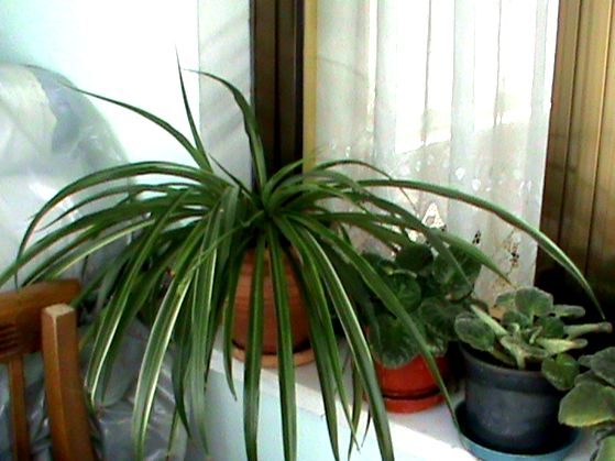 Name:  bitkilerim 028.JPG Views: 3887 Size:  55.0 KB