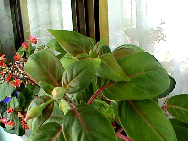 Name:  bitkilerim 029.JPG Views: 3829 Size:  62.9 KB