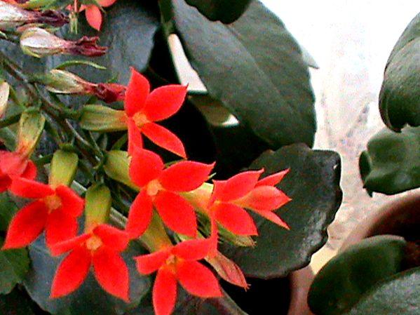 Name:  bitkilerim 030.JPG Views: 3889 Size:  65.3 KB
