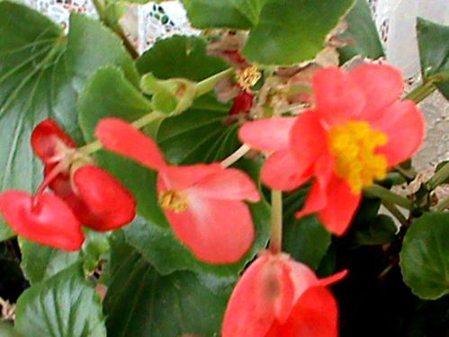 Name:  bitkilerim 031.JPG Views: 3781 Size:  44.7 KB