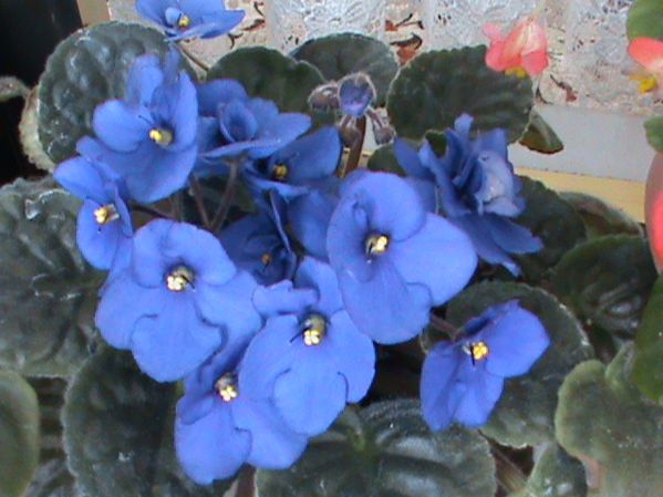 Name:  bitkilerim 033.JPG Views: 3856 Size:  56.6 KB