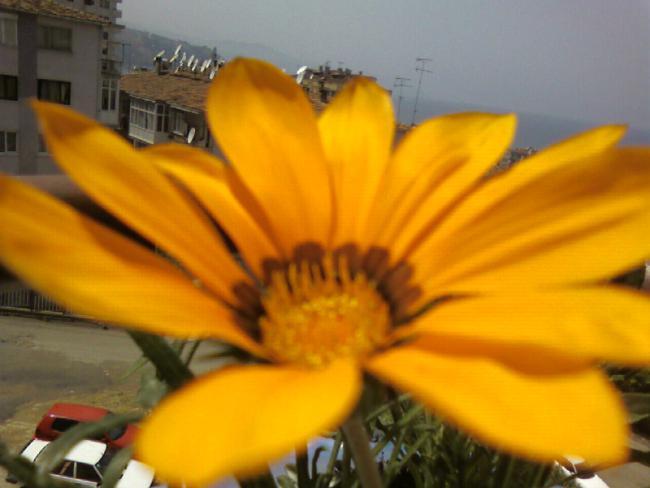 Name:  gazanya (4).jpg Views: 1477 Size:  33.0 KB