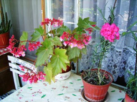 Name:  01052004 annemin çiçekleri (1).jpg Views: 16286 Size:  33.9 KB