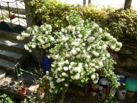 Name:  01052004 annemin çiçekleri.jpg Views: 15379 Size:  40.3 KB