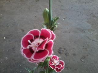 Name:  2012-06-29 20.22.50.jpg Views: 743 Size:  65.4 KB