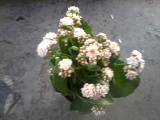 Name:  2012-06-29 20.27.53.jpg Views: 757 Size:  68.0 KB
