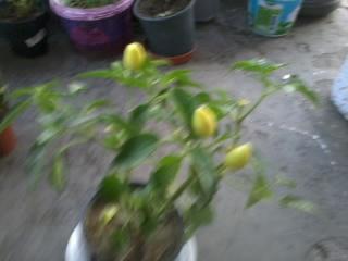 Name:  2012-06-29 20.28.47.jpg Views: 737 Size:  61.0 KB