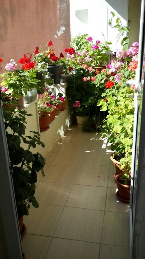 Name:  Balkon 2.jpg Views: 1852 Size:  71.1 KB