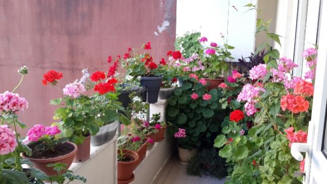 Name:  Balkon.jpg Views: 3486 Size:  44.6 KB