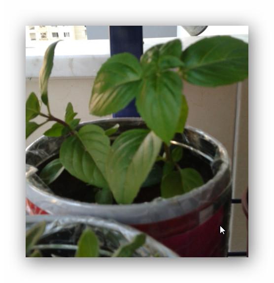 Name:  Ashampoo_Snap_2014.06.25_00h39m27s_007_.jpg Views: 1394 Size:  57.1 KB