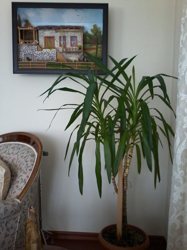 Name:  balkon çiçeklerim 125.jpg Views: 1159 Size:  66.7 KB