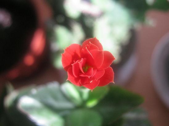 Name:  katmerli kırmızı.JPG Views: 1613 Size:  32.6 KB
