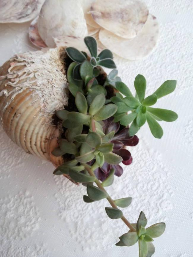 Name:  succulents1.jpg