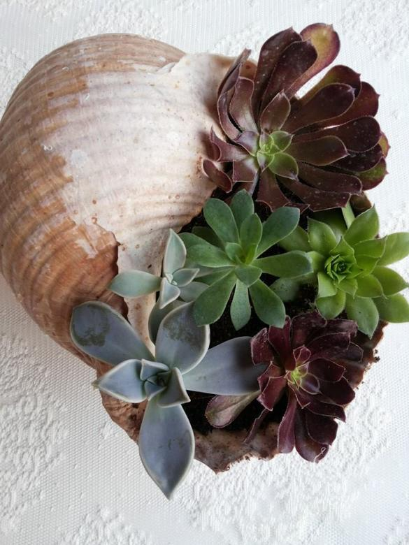 Name:  succulents3.jpg