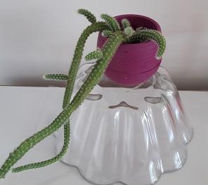 Name:  yılan1.jpg Views: 185 Size:  39.5 KB