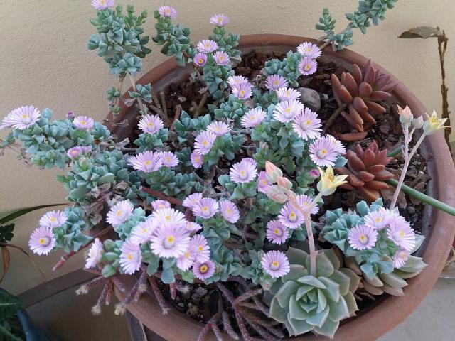 Name:  çiçek.jpg Views: 323 Size:  70.0 KB