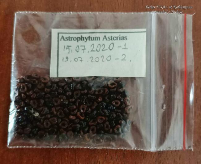 Name:  Astrophytum Asterias Tohum hasatı 2.Bölüm 19.07.2020.jpg Views: 88 Size:  41.9 KB
