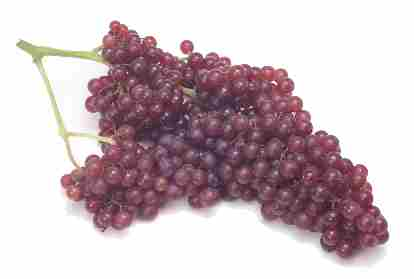 Name:  champagnegrapes3.jpg