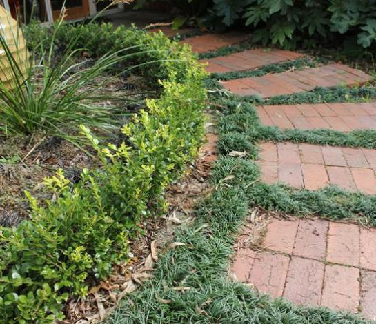 Name:  mondo grass between stepping stones brick pavers glamour drops garden front entrance.jpg Views: 6394 Size:  69.7 KB
