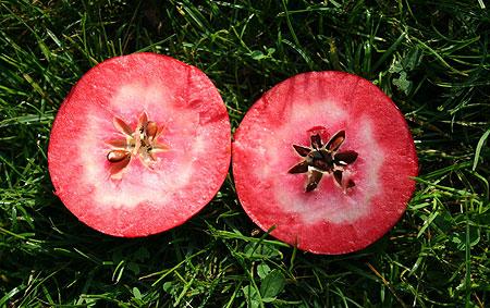 Name:  redlove-apple-pic.jpg Views: 5551 Size:  66.7 KB