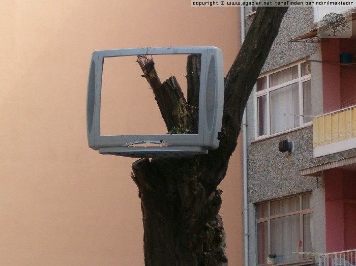 AĞAÇ TV