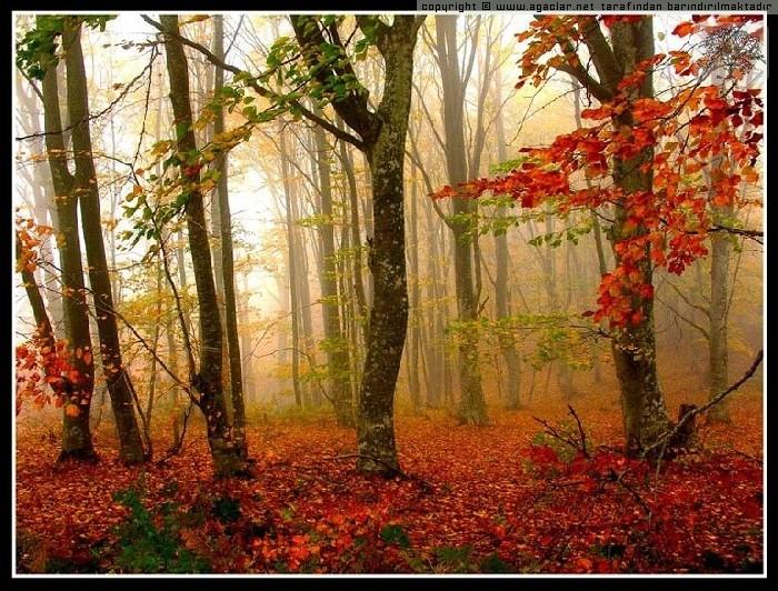 Kuyut Orman