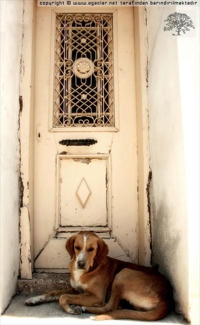 Kapı Bekçisi
