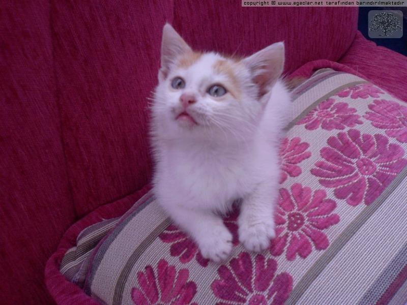 Bebek Kedi