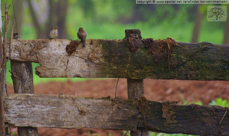 Tahta çit