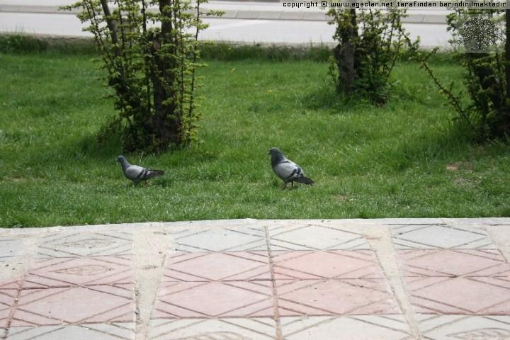 Güvercinler
