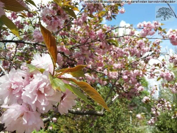 Ankara'da Bahar