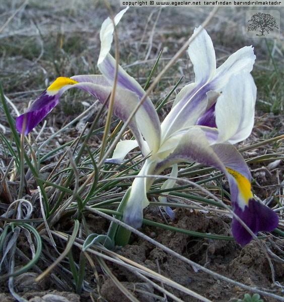 Navruz 2
